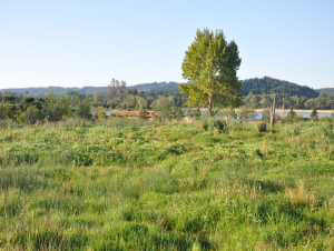 Fernhill wetland